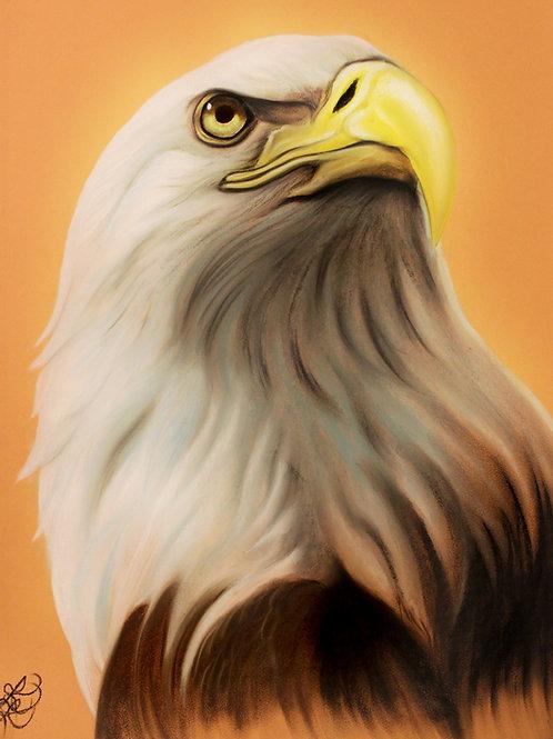 Bald Eagle - Print