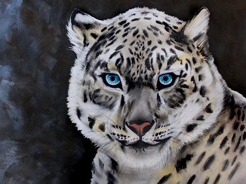 Snow Leopard - Print