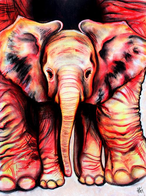 Baby Elephant - Print