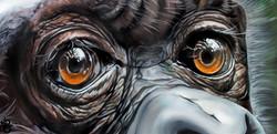 Bubble_s Eyes (1)