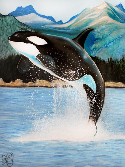 Orca Drawing - Print