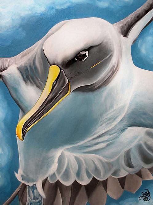 Albatross - Print