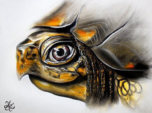 Turtle - Print