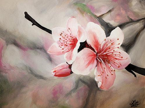 Cherry Blossoms - Print