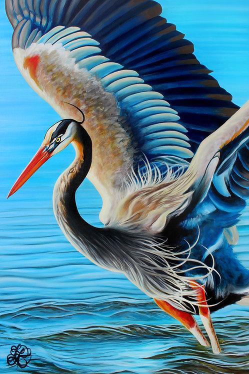 Great Blue Heron - Print