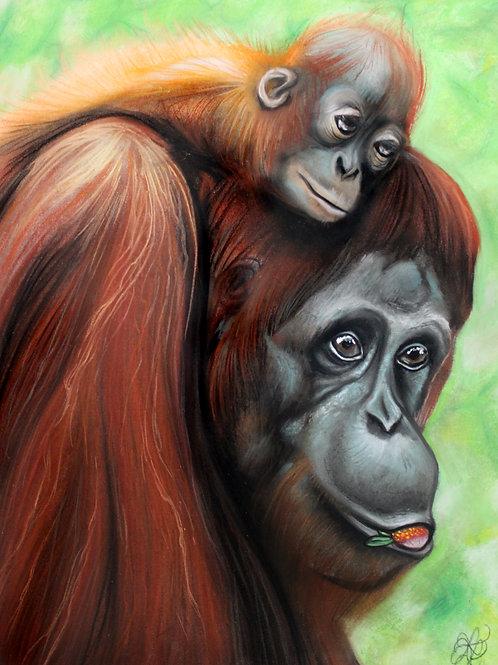Orangutan - Print
