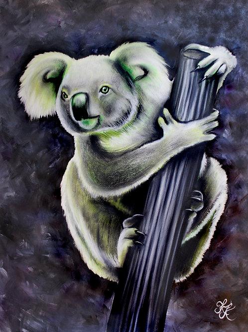 Koala - Print