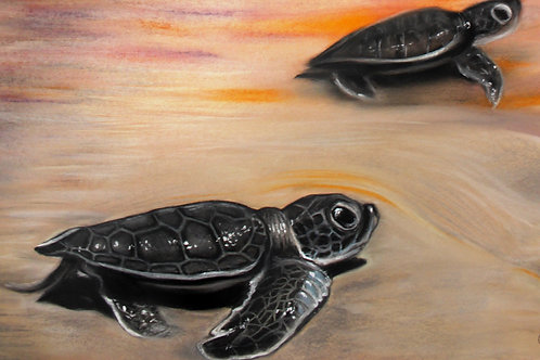 Sea Turtles - Print