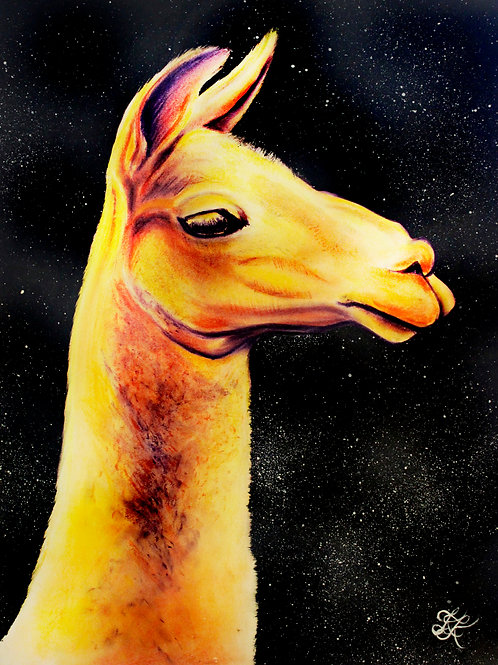 Llama - Print