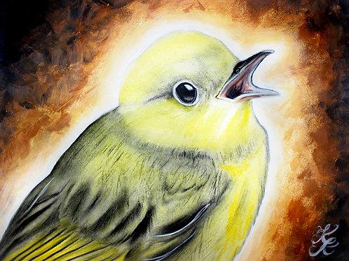Yellow Warbler - Print