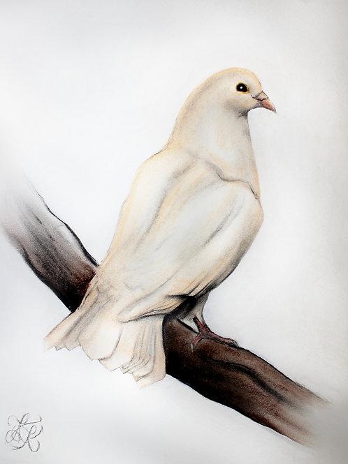 Dove - Print