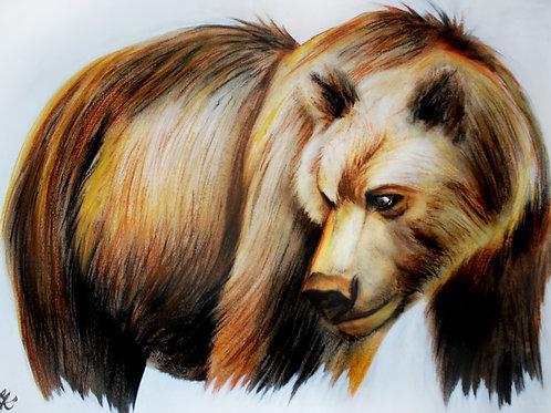 Grizzly Bear - Print