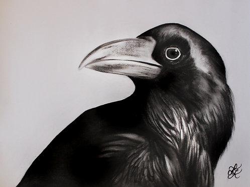 Raven Drawing - Print
