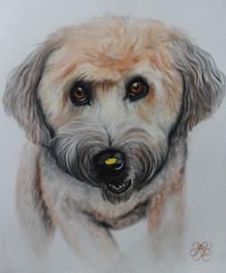 Yellow Leaf Dog Final