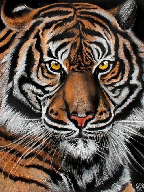 Tiger Portrait - Print