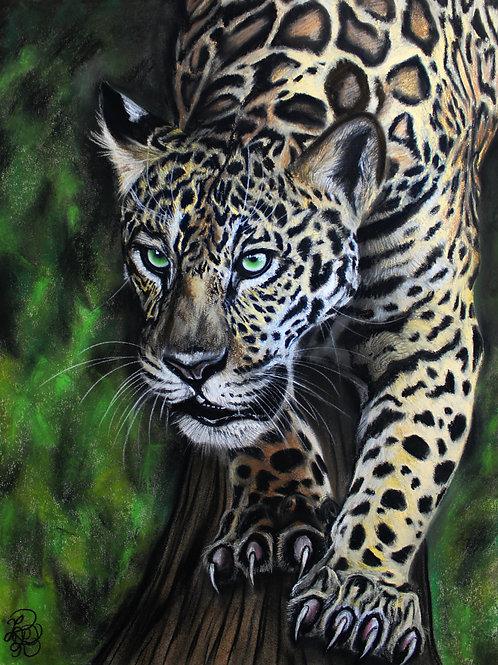 Jaguar Drawing - Print