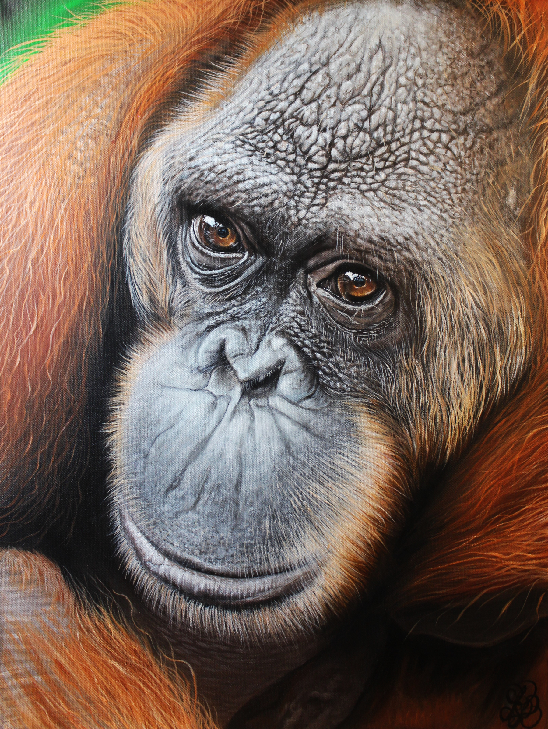 Peanut Orangutan Painting Rephotographed