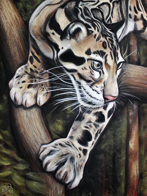 Clouded Leopard - Print