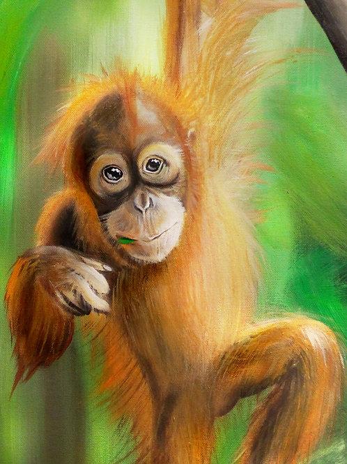 Orangutan Baby - Print