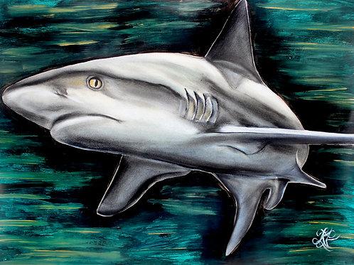Shark - Print