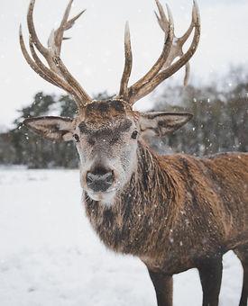 rennes_novège_neige