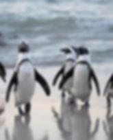 antarctique_plage_pingouins_mer