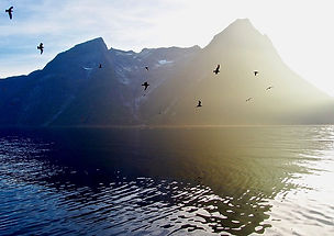 fjord_soleil_oiseaux.jpg
