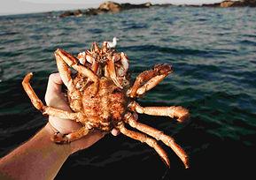 crabe_royal_pêche_mer