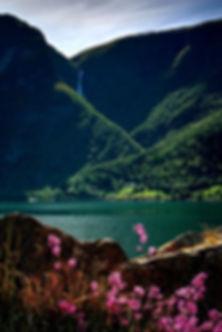 fjord_été_soleil_fleurs.jpg