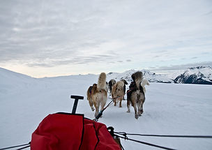 chiens_traineau_musher2.jpg