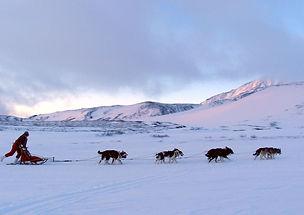 chiens_traineau_neige_montagnes