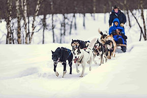 camp_tamok_chiens_traineaux_neige_forêt3