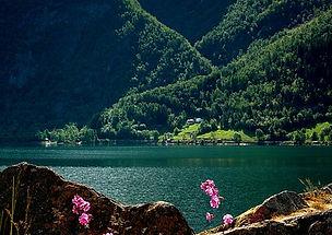 fjord_été_soleil_fleurs