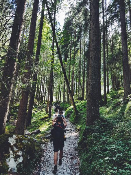 randonnée_forêt3.jpg