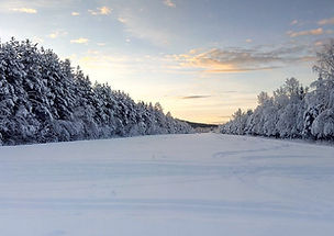 suède_forêt_neige.jpg