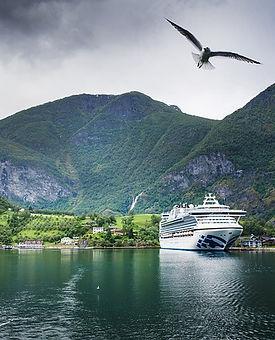 croisière_fjord_oiseau_été