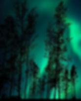 aurores_boréales_vertes_forêt.jpg