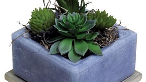 Cactus Water Fragranced Wax GEO