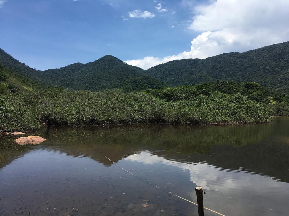 Manguezal e rio na Praia Grande da Cajaíba