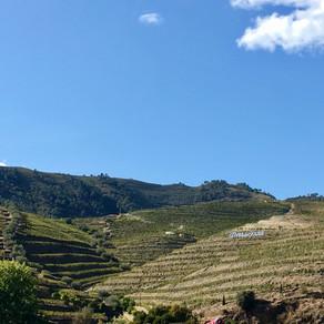 Rumo ao Alto Douro Vinhateiro e suas Vindimas