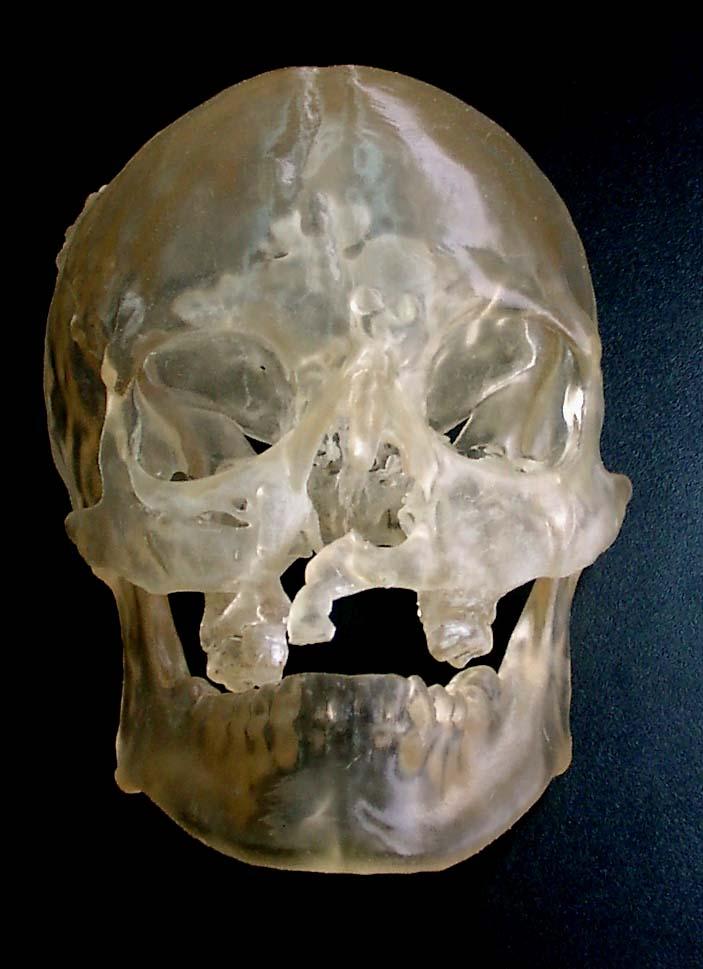 модель черепа для моделирования