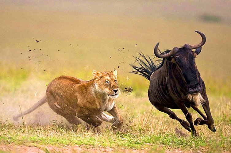 Serengeti_Migration_Safari_Tanzania_Zara