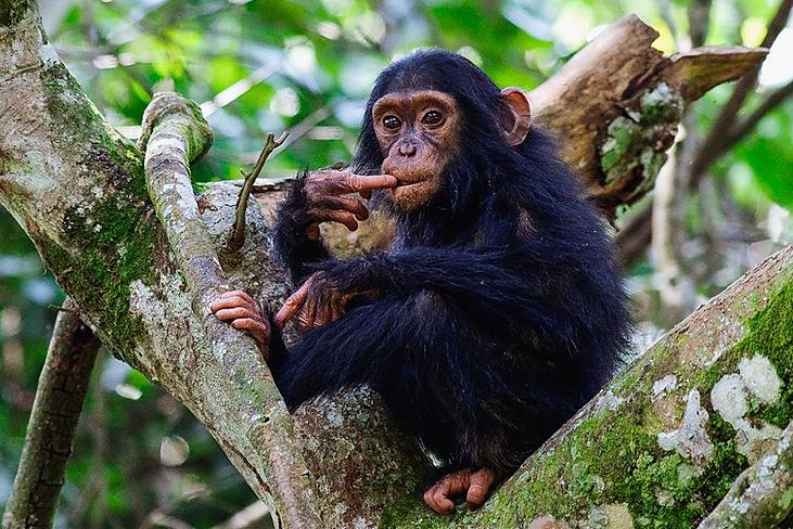 primates-of-uganda-timbuktu-travel.jpg