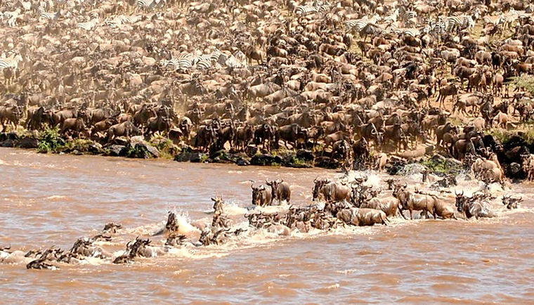 Migration-masai-mara-1.jpg