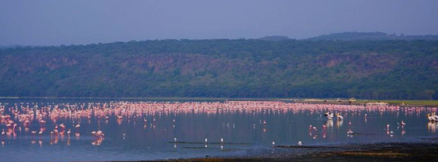 Kenya Coast Flamingos