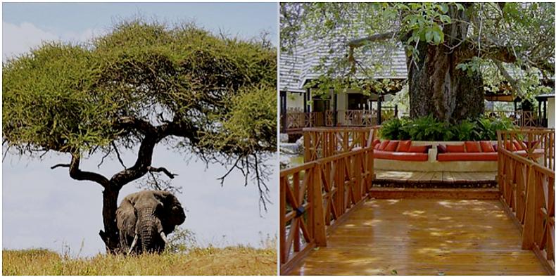 Arusha Lodge in Tanzania