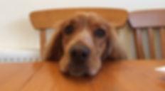 Canine Kleptomaniac