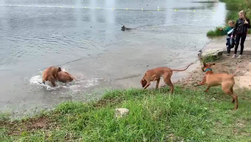 Wel of niet het water in?