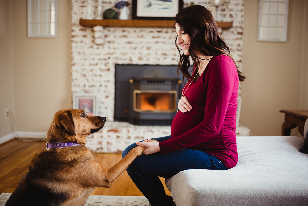 family dog with baby bump