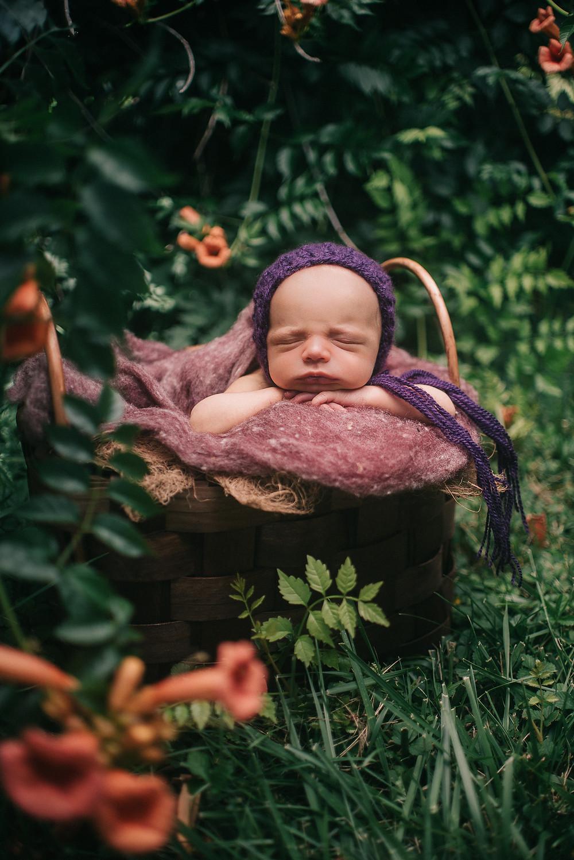 newborn girl posed newborn photos